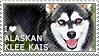 I love Alaskan Klee Kais by WishmasterAlchemist