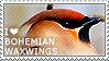 I love Bohemian Waxwings