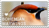 I love Bohemian Waxwings