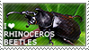 I love Rhinoceros Beetles by WishmasterAlchemist
