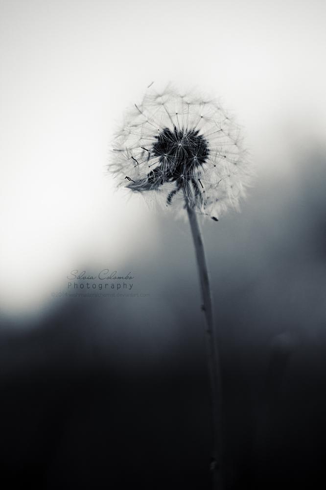 Solitudini by WishmasterAlchemist