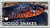 I love Indigo Snakes by WishmasterAlchemist