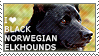 I love Black Norwegian Elkhounds by WishmasterAlchemist