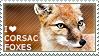 I love Corsac Foxes
