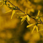 Yellow[card]