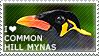 I love Common Hill Mynas