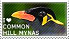 I love Common Hill Mynas by WishmasterAlchemist