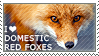 I love Domestic Red Foxes by WishmasterAlchemist