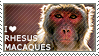 I love Rhesus Macaques by WishmasterAlchemist