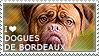 I love Dogues de Bordeaux by WishmasterAlchemist