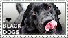I love Black Dogs by WishmasterAlchemist