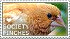 I love Society Finches by WishmasterAlchemist