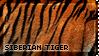 [AP XIII] Siberian Tiger by WishmasterAlchemist