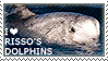 I love Risso's Dolphins by WishmasterAlchemist