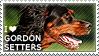 I love Gordon Setters by WishmasterAlchemist