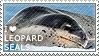 I love Leopard Seals by WishmasterAlchemist