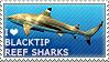 I love Blacktip Reef Sharks by WishmasterAlchemist