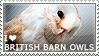 I love British Barn Owls by WishmasterAlchemist