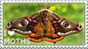 I love Moths by WishmasterAlchemist