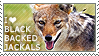 I love Black-backed Jackals by WishmasterAlchemist
