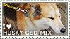 I love Husky-German Shepherd Mix by WishmasterAlchemist