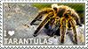 I love Tarantulas