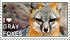 I love Gray Foxes