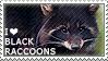 I love Black Raccoons