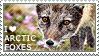I love Arctic Foxes [summer coat]