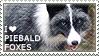 I love Piebald Foxes by WishmasterAlchemist