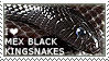 I love Mexican Black Kingsnakes by WishmasterAlchemist
