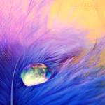A Feather's Tear