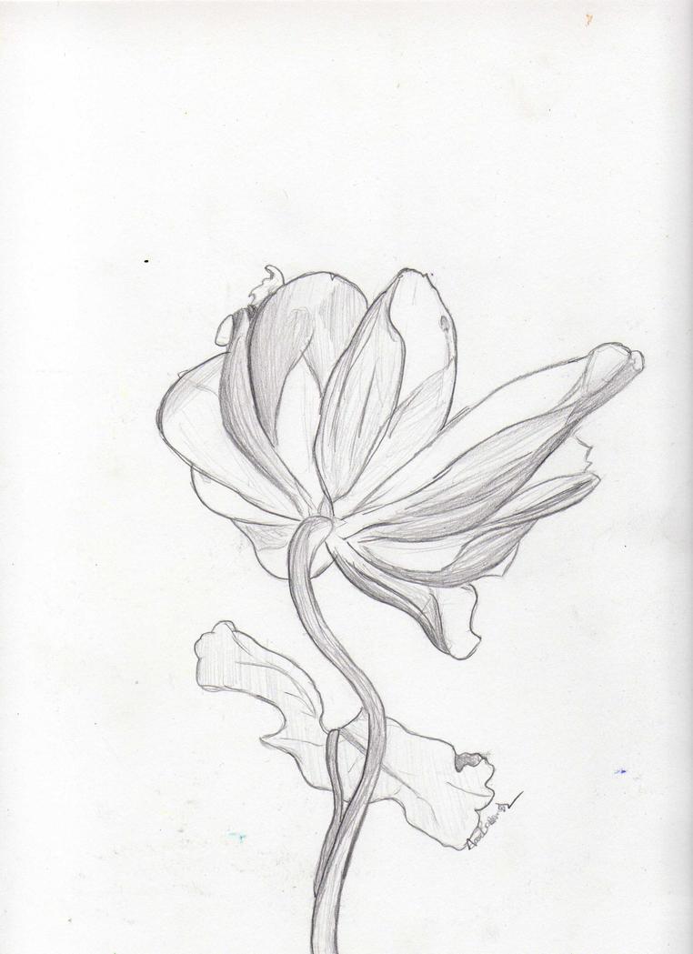 Flower by Noaaa7