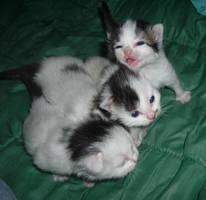 kittens by JZFantasy