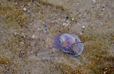 Snailling Around by BlackandWhite1020