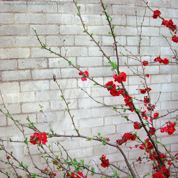 Red Blossoms by Cattereia