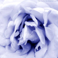 Blossoming Blue by Cattereia