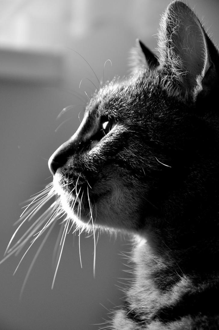 Z profilu. by Fiedka