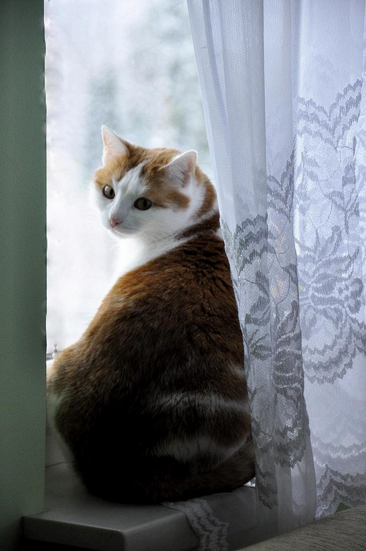 Panienka z okienka. by Fiedka