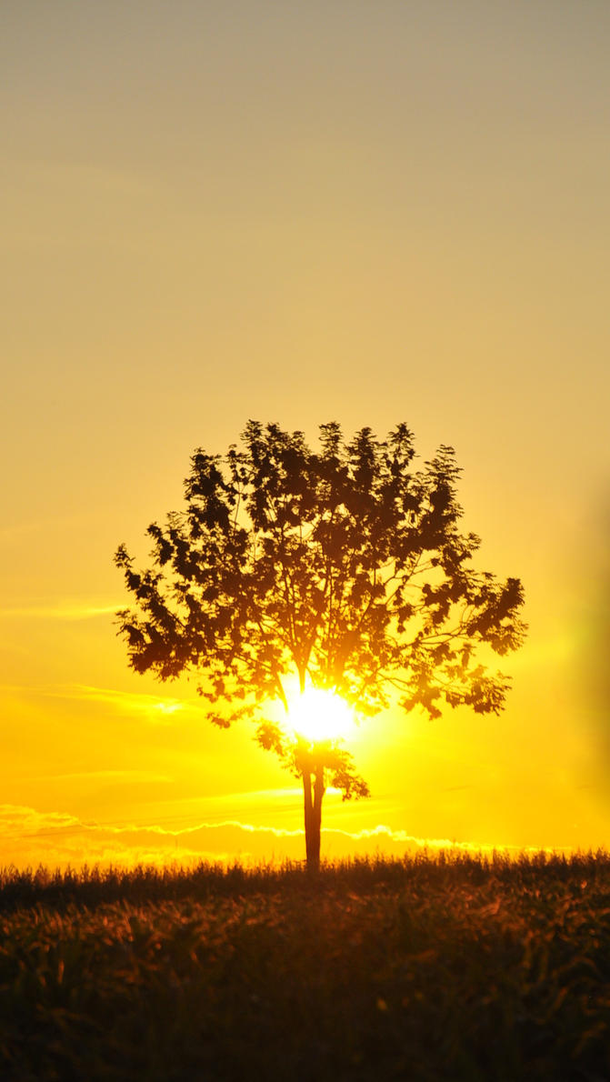 Drzewo. by Fiedka