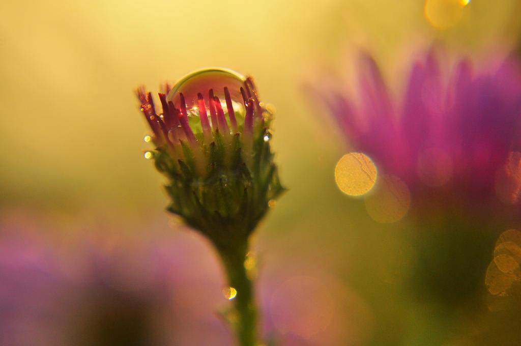 Drops. by Fiedka