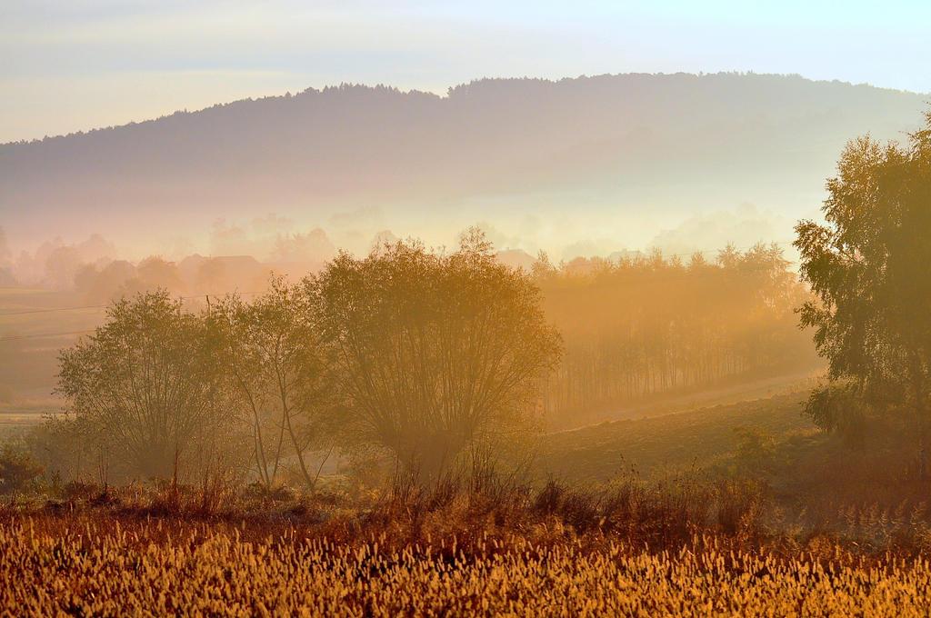 foggy morning. by Fiedka