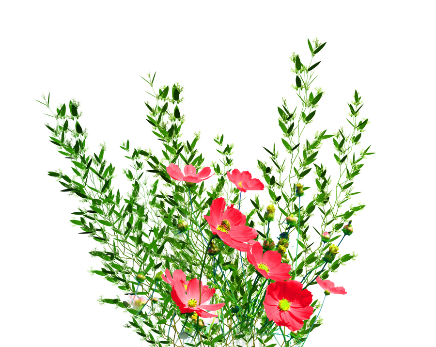 PNG Garden Flowers by KmyGraphic on DeviantArt