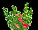 PNG Garden Flowers