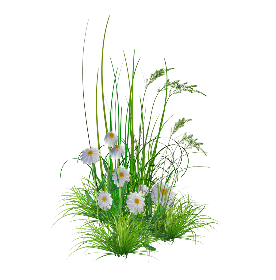 Flower Plant Png Png Garden Flowers by