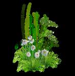PNG Garden Flowers*