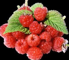 Rapsberry by KmyGraphic
