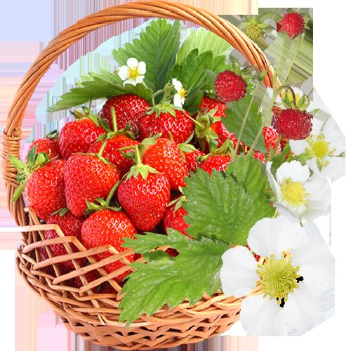 Strawberry Flowers by KmyGraphic