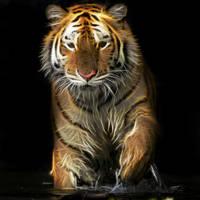 Tiger by KmyGraphic