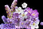 Flori by KmyGraphic